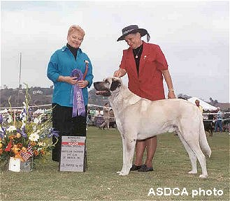 Beau at 2001 ASDCA Specialty